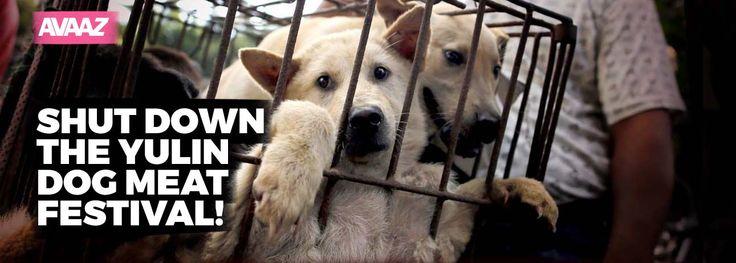 Avaaz - Shut down the Yulin dog meat festival!