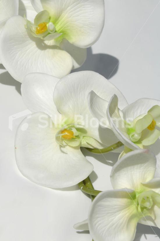 Fresh Touch Ivory Phalaenopsis Orchids, Artificial Orchids Fresh Touch White Phalaenopsis Orchids, Artificial Orchids [DE0017 Off White] - £14.99 : Silk Wedding Flowers, by Silk Blooms, Glasgow