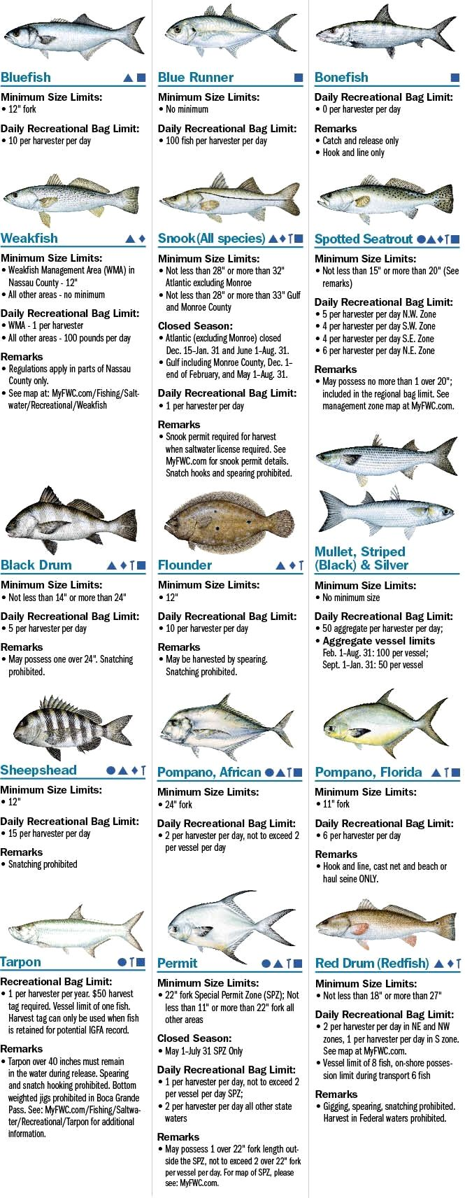 Salt Water Fishing Fishing For Entertainment Is A Great Hobby When You Are Together With Friends Or Family Saltwater Fishing Fishing Tips Salt Water Fishing
