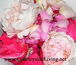Розовая вода, рецепт. В рецепте используйте душистые розы и шиповники с запахом мирры или фруктово-цитрусовыми ароматами