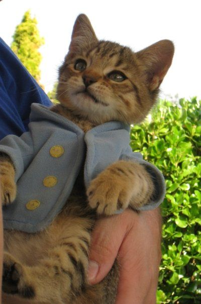 Gorgeous Tom Kitten Grey And White Ready To Go: 670 Best The Well Dressed Cat Images On Pinterest