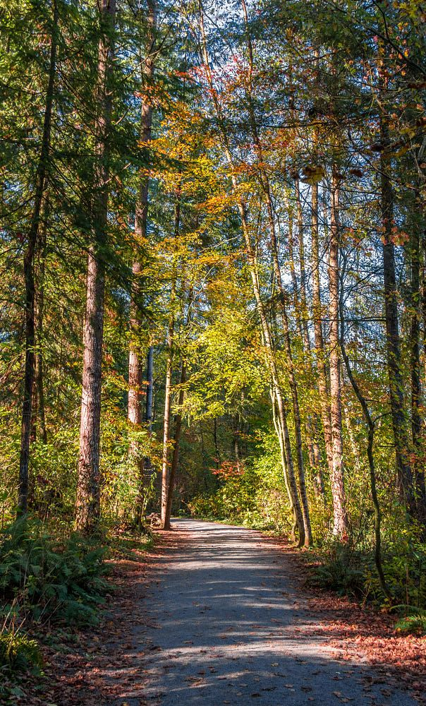 A Fall Walk By Sarah Verkaik Photo 125233399 500px Walking In Nature Beautiful Forest Forest Photography