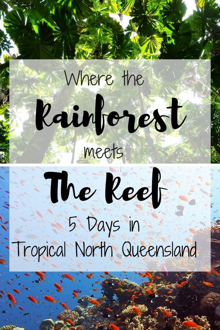 Five days in Cairns and Tropical North Queensland is just long enough to give you a taste of the amazing things this region has to offer. Explore the Great Barrier Reef, Daintree Rainforest, ancient Indigenous culture and a thriving city scene all on this