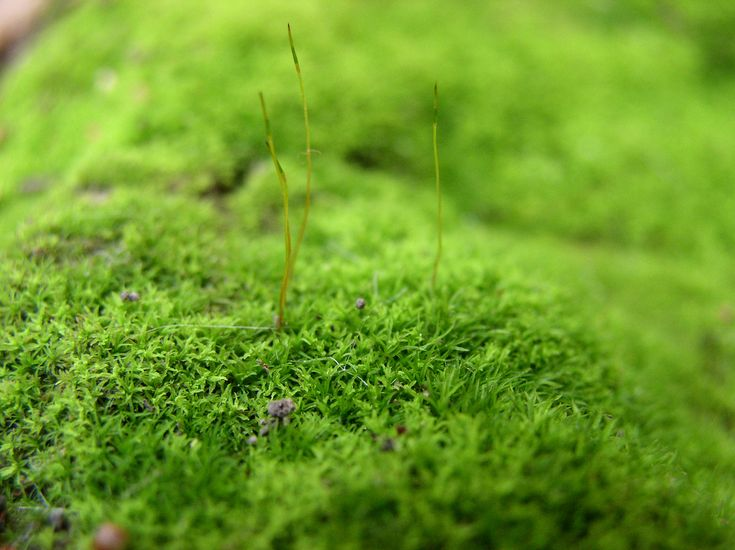 How To Embrace Moss Ground Covers