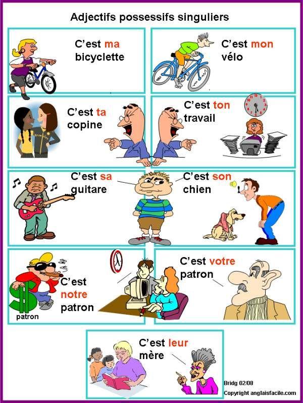 Adjectifs possessifs singuliers