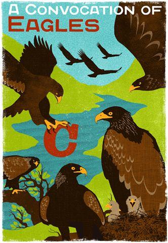 A Convocation of Eagles   collective nouns   birds