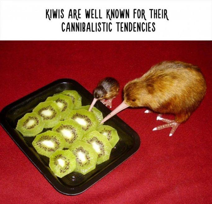 Funny Pics of Hilarious Animals