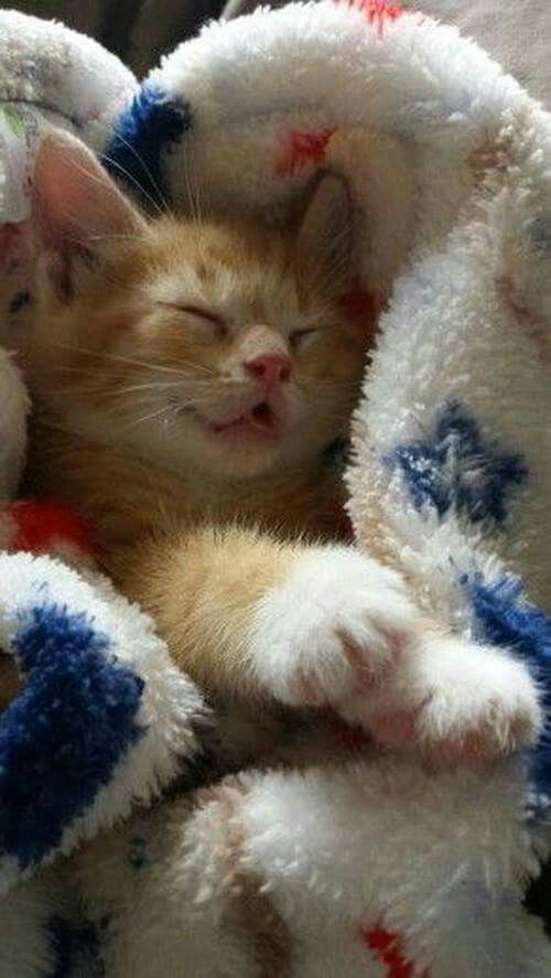 7 Cute, Sleepy Cats Who Just Can't Stay Awake [VIDEOS