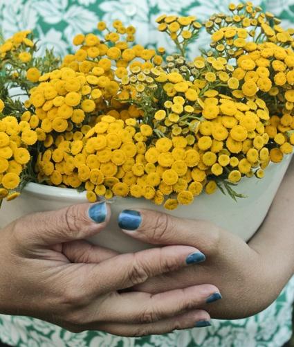 Gula blommar +blå naglar =svensk sommar