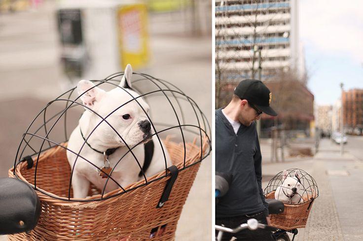 French Bulldog Bike Basket