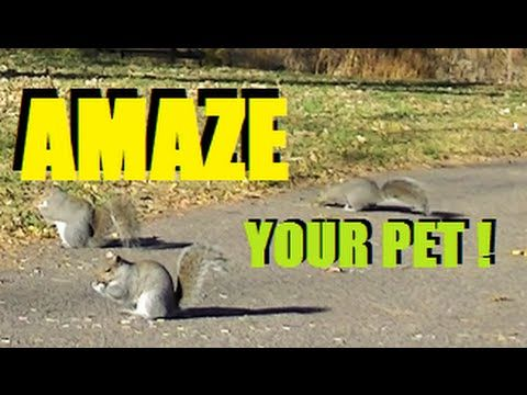 BEAUTIFUL Videos For Cats and Dogs To Watch ! (3 HOURS) Squirrels,Bunnies,Pigeons, Birds, -