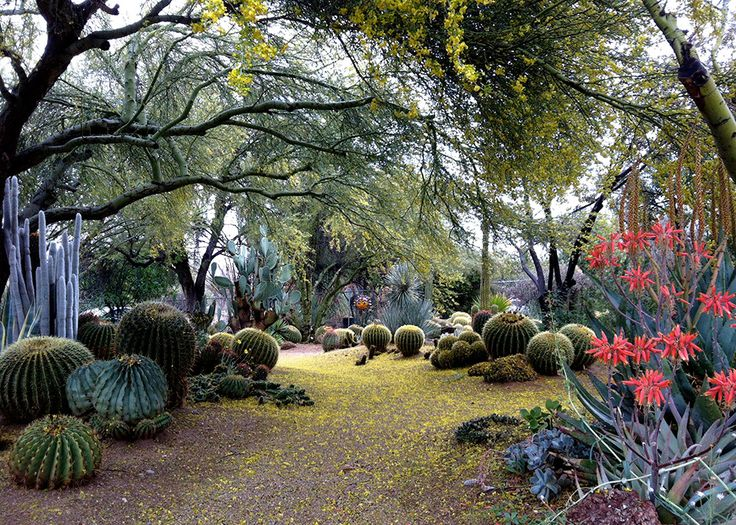 This Would Be A Very Cool Backdrop For Ceremony! Itu0027s A Cactus Garden At A