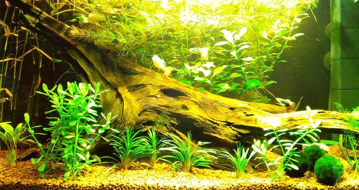 Мой домашний аквариум / My home aquarium