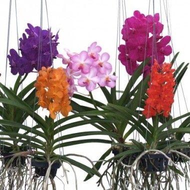 les 21 meilleures images du tableau orchid es sur pinterest art floral fleurs et jardinage. Black Bedroom Furniture Sets. Home Design Ideas