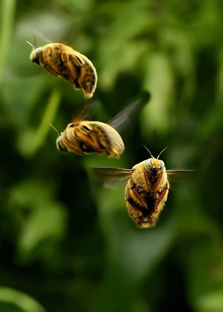 """Bees ~ """"Just Buzzing Around..."""" ✨"""