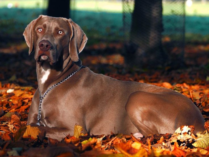 Fall Dog Recipes, Chicken soup for your dog