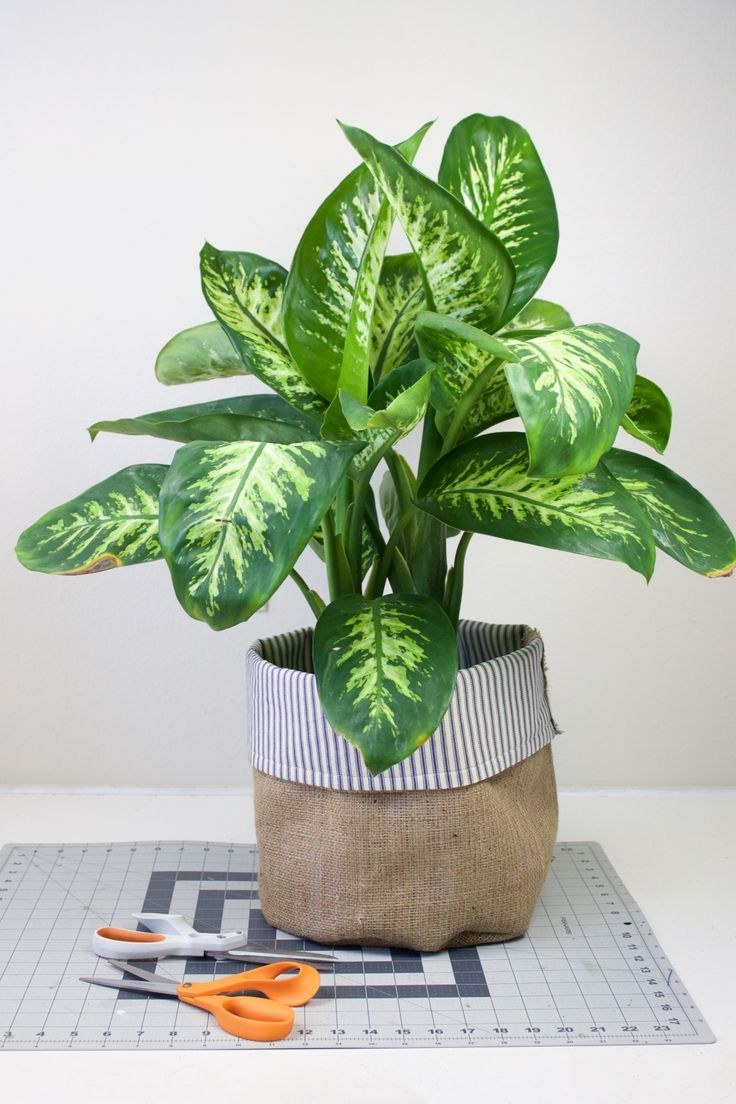 Add flair to your indoor garden with our DIY fabric planters. Not only are they a fun way to dress up your plants, they can be customized to fit any planter or pot. Click in for the full guide.