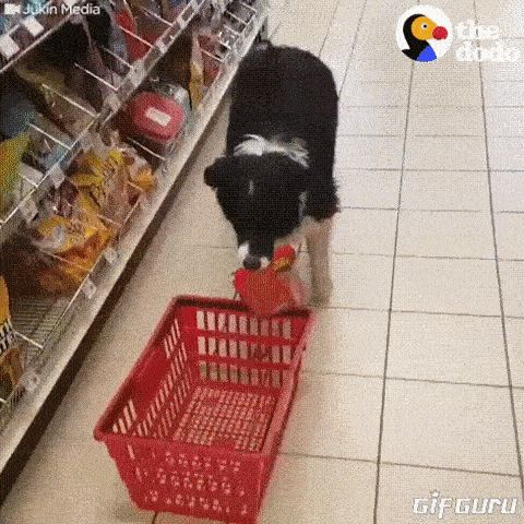 That's all we need. A Canadian Border Collie shopping where every new home owner goes on Saturday morning.