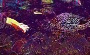 "New artwork for sale! - "" Duck Feeding Pond Wild  by PixBreak Art "" - http://ift.tt/2uJcDEz"