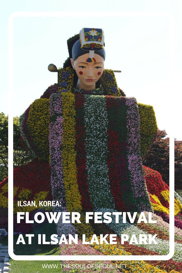 Flower Festival At Ilsan Lake Park, Ilsan, Korea. This spring festival on the banks of Ilsan Lake provide some amazing flowers and plants to see in a picture perfect location near Seoul. What to do this spring.