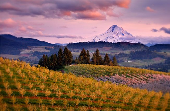 Oregon's Willamette Valley is around 45° latitude, the same as Burgundy - the other great Pinot Noir producing region. #pinotnoir #wine