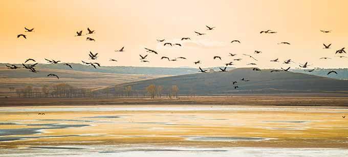 Lagunas de Gallocanta, Zaragoza. No es un gran bosque, el terreno no está lleno de hojas muertas que crepitan cuando las pisas… pero aun así es un lugar que deberías visitar en otoño. En el corazón de una reserva natural es la mayor laguna salada de Europa y el hogar de más de 220 especies de aves que se toman un respiro en su migración. Si te gustan las grullas, a partir de octubre se instalan aquí más de 40.000, haciendo un alto en el camino hacia el sur de España y África.