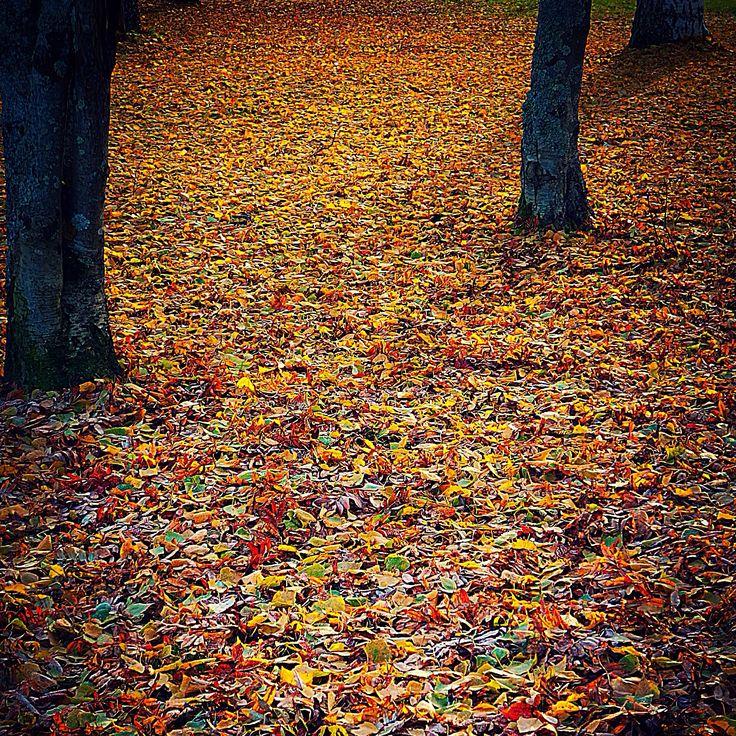 Syksy autumn