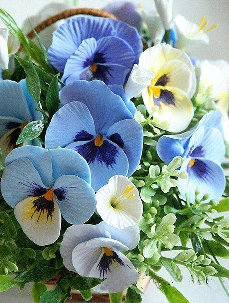 Pansy, or Viola tricolor...I'm in love with these colors.