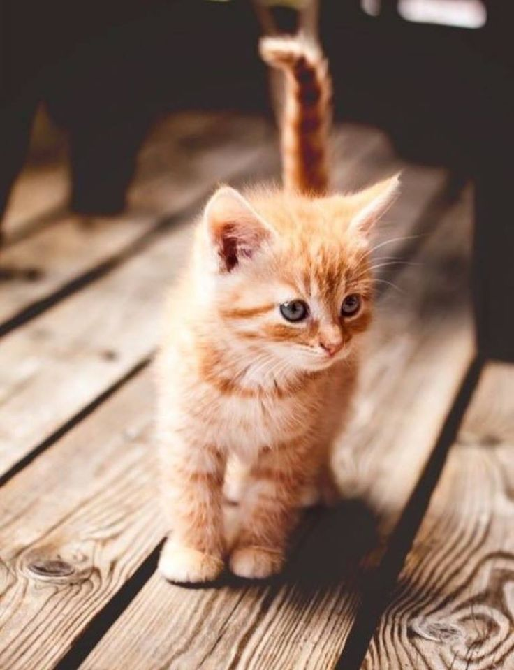 What a ginger cutie !