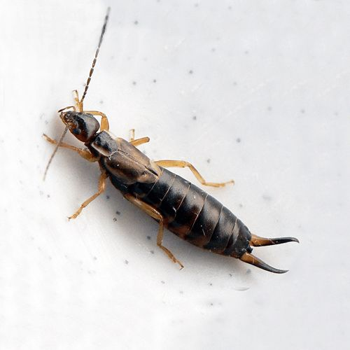 Natural Way To Kill Cockroaches Bugs
