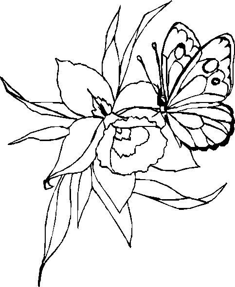 papillon dessin recherche google