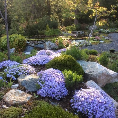 Shown here are creeping phlox, dwarf boxwood, hebe, thyme and iris, which would be considered safe to plant over the septic field.