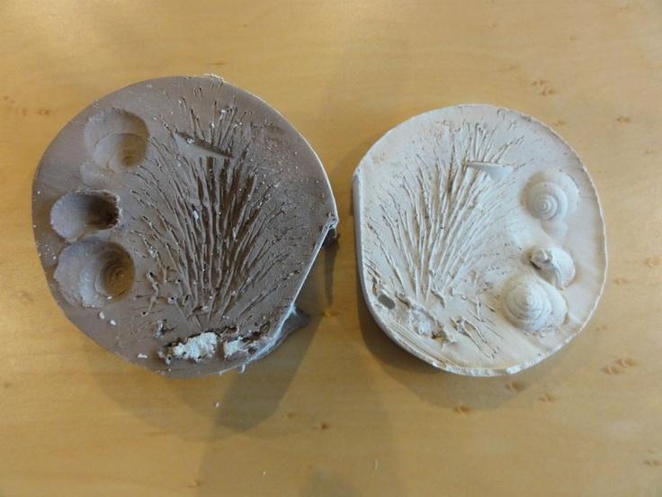 Fossielen met gips en klei maken bij het MEC op woensdagmiddag. www.natuureducatie.nl