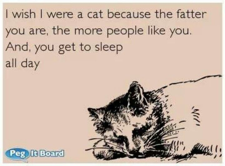 E Cards Funny Quotes Sleeping. QuotesGram