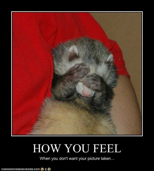 229 best ferret images on pinterest ferrets  funny ferret clipart free ferret clip art cnc