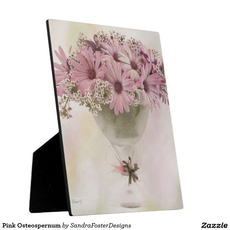 Pink Osteospernum Plaques