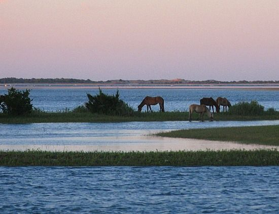 Ocracoke Island Wild Horses