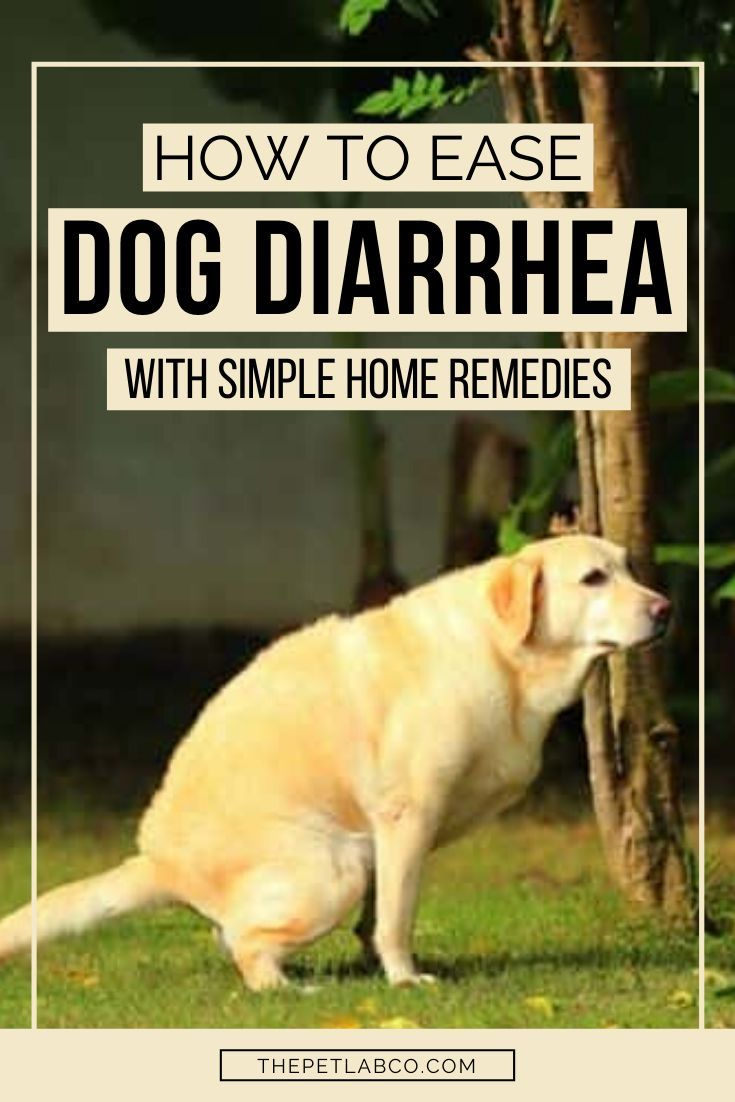 5 Simple Home Remedies To Ease Doggy Diarrhea Dog Upset Stomach