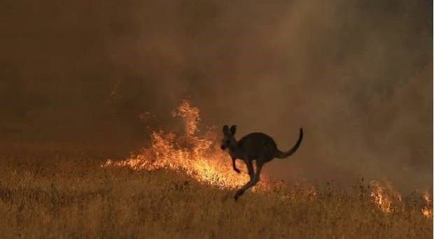 Devastating News Half A Billion Animals Have Perished In