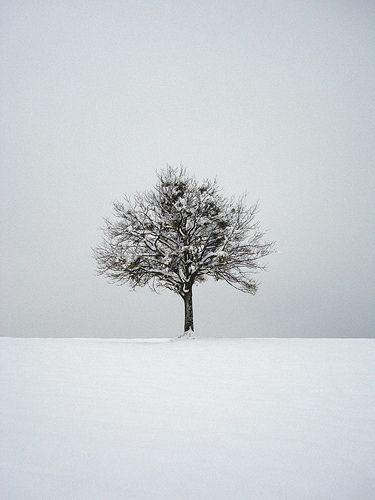 lone snow tree
