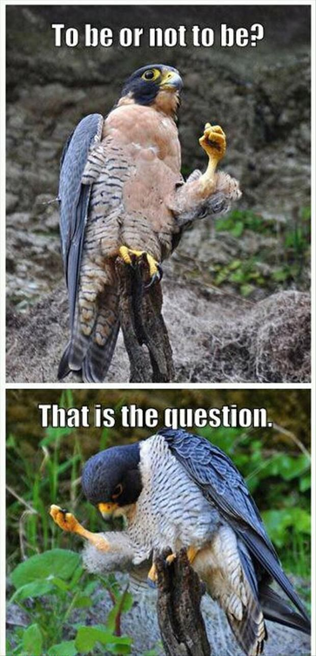 Funny Pictures – 45 Pics