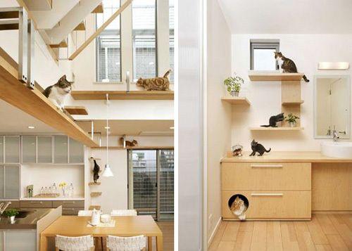 cat house plans ile ilgili pinterest'teki en iyi 25'den fazla