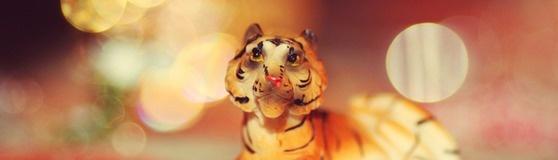 Secret 419 | Wild Animal Park | Outdoors | Nanhui | Shanghai