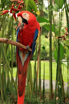 Amazon rainforest, bright, red, green, trees, jungle, animal, parrot, life