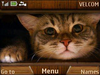 Free British cat theme by galina53 on Tehkseven