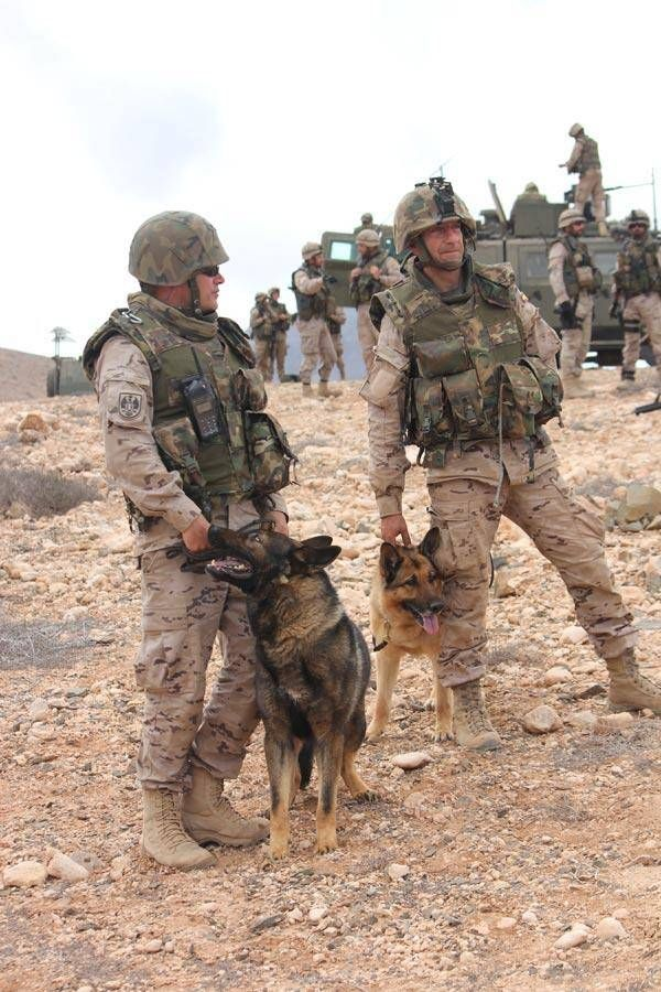 these dogs are each so focused on their handlers that they simply aren't…