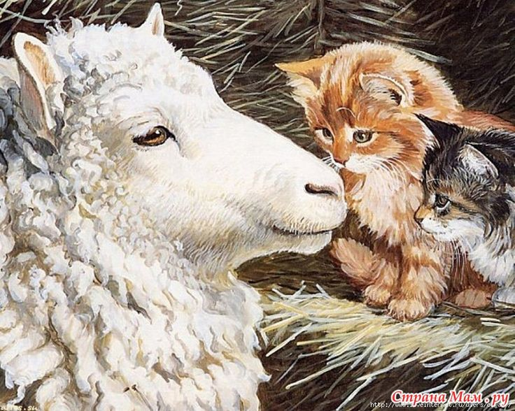 Открытки днем, овечки картинки для декупажа
