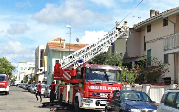 louiseville rue st marie | Sciame d'api e paura in via Versilia, intervengono i Vigili del Fuoco ...