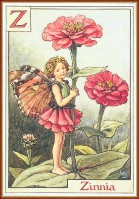 Zinnia Fairy