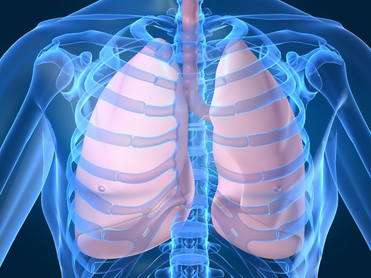 15 Plants & Herbs That Can Boost Lung Health, Heal Respiratory Infections & Repair Pulmonary Damage